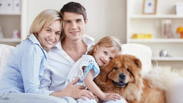 Wills & Trusts dog-young-family Direct Wills Waterlooville